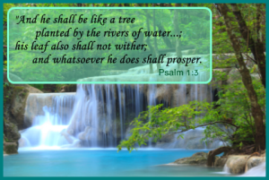 Tree-planted-by-the-rivers-of-water-Psalm-1-3