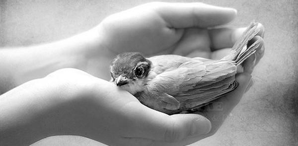 bird_in_hand